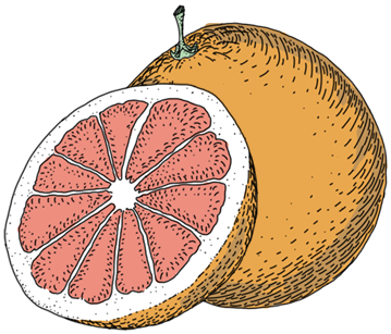 ThreeCents_grapefruit_1